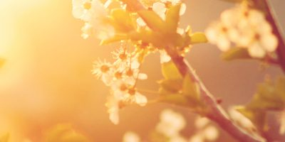 Why Imbolc is Such an Important Time